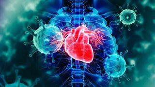 Коронавирус и сердце: что на данный момент известно об осложнениях COVID-19 на главную мышцу организма?