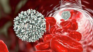 Ученые обнаружили новый маркер тяжелого течения коронавируса. Все дело в клетках-предшественниках тромбоцитов