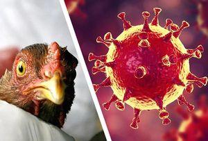 Птичий грипп (2003)