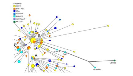 Как коронавирус распространился из Уханя? Ученые воссоздали перемещения и мутации COVID-19